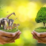 Why wildlife matters